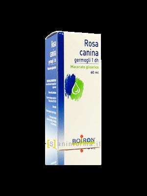 Rosa Canina Germogli Boiron
