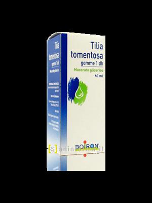 Tilia Tomentosa Gemme 1 dh